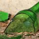 Liquor seller stabs customer to death in Osun