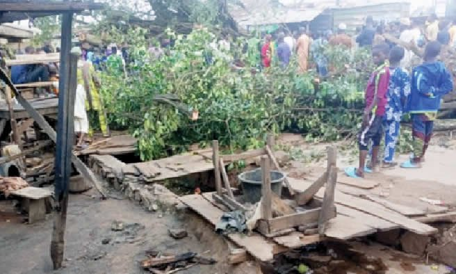 100-year-old tree kills four traders during downpour in Oyo